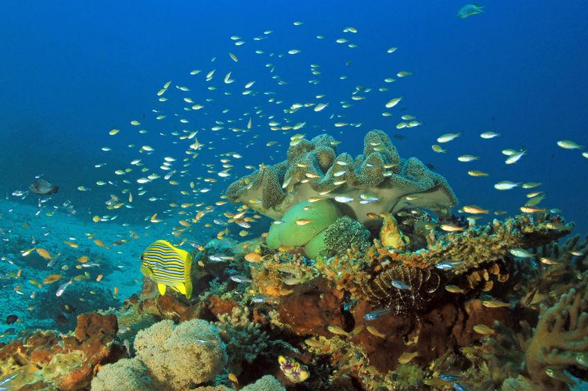 75492267 - colorful coral reef against blue water. dampier strait, raja ampat, indonesia