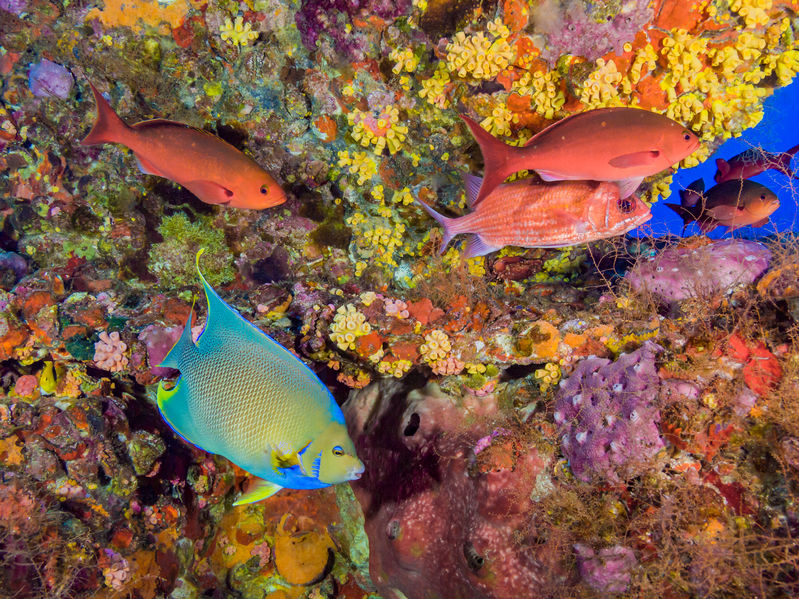 97292294 - colorful fish on underwater oil rig