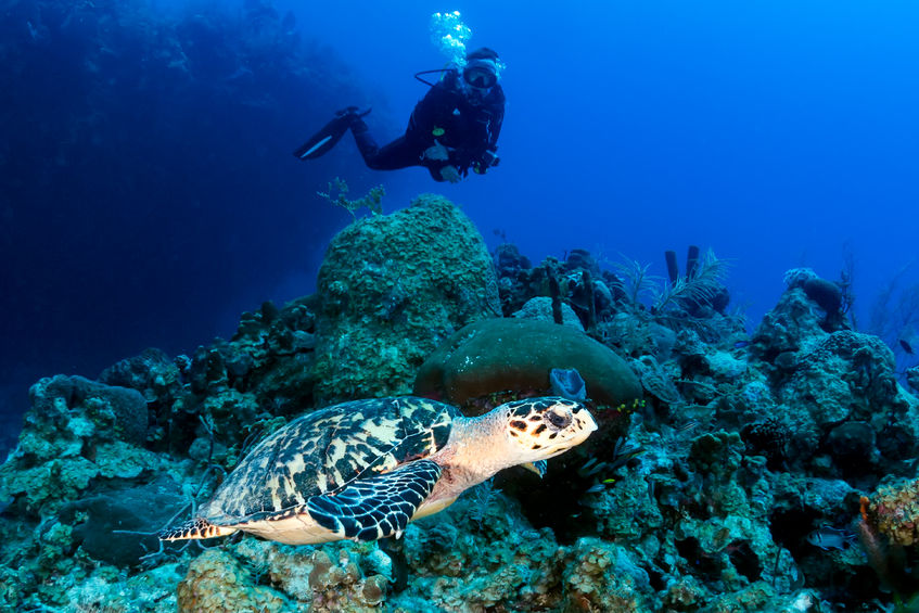 59836419 - female scuba diver and turtle on a coral reef
