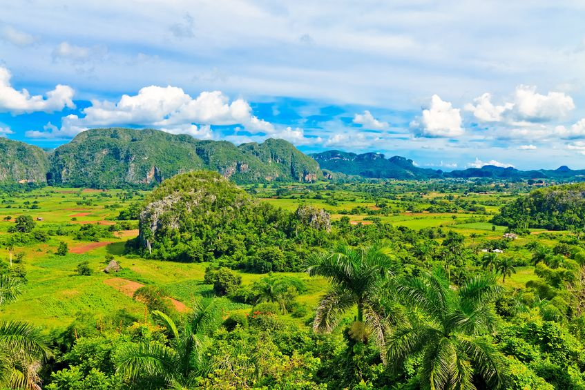 11116317 - the vinales valley in cuba, a famous tourist destination and a major tobacco growing area