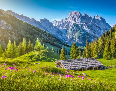 44059868 - idyllic landscape in the alps with traditional mountain chalet and fresh green mountain pastures with blooming flowers at sunset, nationalpark berchtesgadener land, bavaria, germany