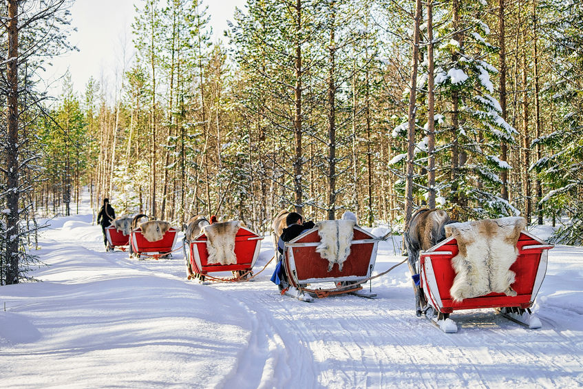 Reindeer caravan safari with people in winter forest in Rovaniemi, Lapland, Northern Finland.